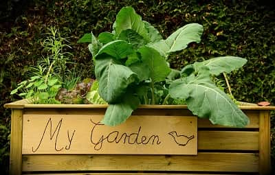 Spring Gardening Tips: Cares for your garden